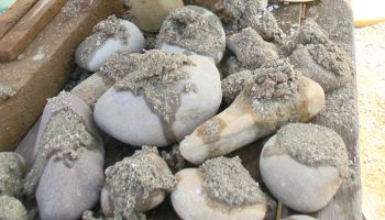 自然素材の魅力 石